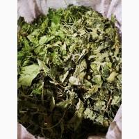 Смородина таёжная (лист) Горный Алтай (оптом от 5кг)