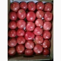 Помидоры розовые тепличные Пинк ПарадайзКраснодар, от фермера оптом