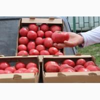 Осуществляем оптовую продажу помидоров