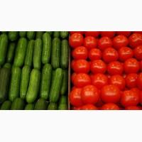 Купим огурец свежий и томаты с доставкой в г. Ульяновск с НДС