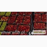Зимние яблоки- Чемпион, Лиголь и др