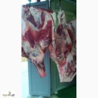 Продаем говядина корова, бык охлажденные, замороженные