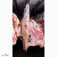 Мясо в четвертинах