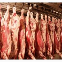Куплю говядину, коровы, полутуши, 100+, 1 категории, полутуши, охлажденные