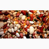 Продаем семена озимых зернобобовых смесей для выращивания зеленого корма и сенажа