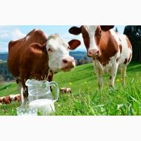 Премикс П60-1 для дойных коров (стойловый период), 25 кг