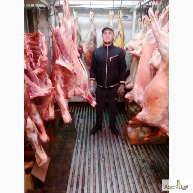 Мясо говядина купить дешево в москве