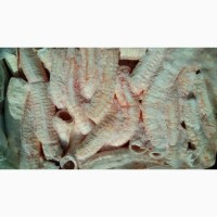 Трахея трубчатая
