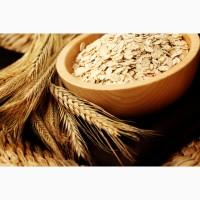 ООО НПП «Зарайские семена» продает семена овса оптом