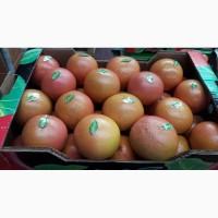 Грейпфрут Дункан - отличное приобретение для оптовика