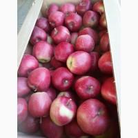 Яблоки Глостер, лигол