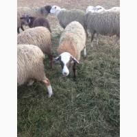 Шерсть Баранов/овец продаём