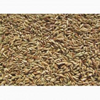 Семена суданской травы Саратовская 1183 ЭС, РС1, РСт