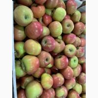 Продаем яблоки 1 сортов