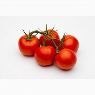 Продам томаты сорт Merlis