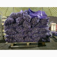 Картофель оптом от производителя, 10 руб/кг