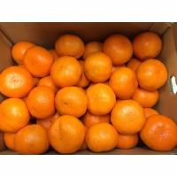 Готов к оптовой продаже мандарин Миховайс по цене от производителя