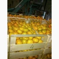 Лимон высшего качества