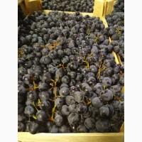 Виноград чёрный оптом из Молдавии напрямую от производителя