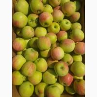 Яблоки от производителя