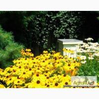 Пчелопакеты среднерусской породы пчел башкирской популяции. Весна 2017г