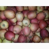 Продаются яблоки