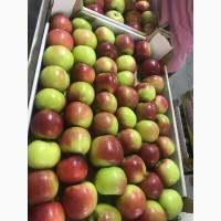 Купить яблоко оптом Краснодарский край