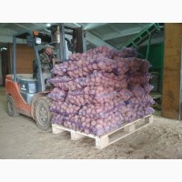 Картофель продовольственный отборный