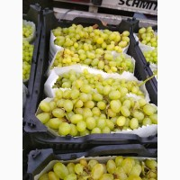 Виноград Кишмиш белый(без косточек) оптом из Ирана напрямую от производителя