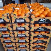 Апельсин со склада от прямого импортера
