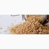 Бурый рис оптом от производителя
