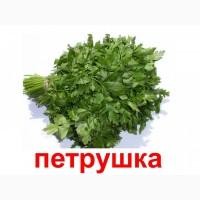 Петрушка, свежая зелень в ассортименте