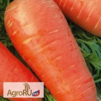 Кордоба F1, семена моркови, 500 000 шт. (Бейо)