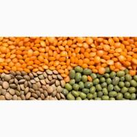 ООО НПП «Зарайские семена» реализует семена чечевицы оптом