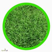Семена однолетних и многолетних трав