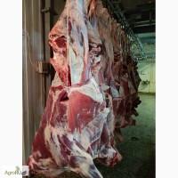 Говядина бык охлажденный
