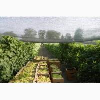 Продаем виноград от производителя в Крыму!Урожай 2018 года