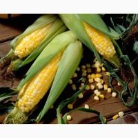 Гибриды семена кукурузы ДКС 3511, ДКС 4014 Монсанта, Monsanto