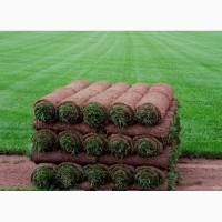 Продаем рулонный газон Спортивный от 130 руб/рулон