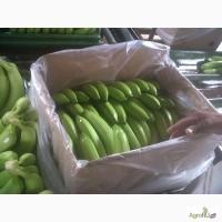 Бананы из Эквадора от производителя