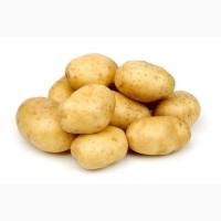 Продаём картофель оптом с доставкой по России