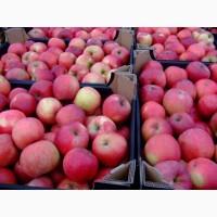Продам яблоки Айдаред, Голден, Гала, Лиголь, Джанаред