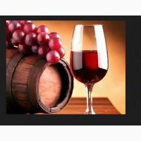 Винный виноград изабелла красный
