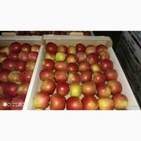 Продаю яблоки оптом