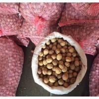 Продаём грецкий орех оптом