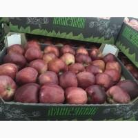Яблоки Краснодарские оптом