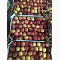 Яблоки оптом сорт Либерти