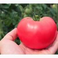 Семена томата Малинка Стар F1 250, 500 шт