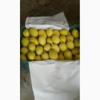 Продам Лимоны из Сирии