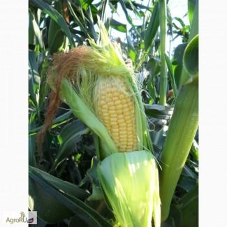 Оптовая продажа кукурузы